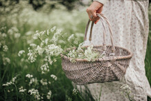 Woman Carrying A Basket Of Cow Parsley.