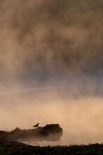 Silhouette Of Duck On Foggy Lake Shoreline