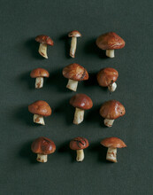 Collection Of Mushrooms On A Dark Green Background