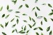 canvas print picture - Green tea leaves on light background