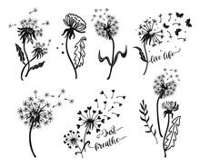 Set Of Dandelion Silhouettes.