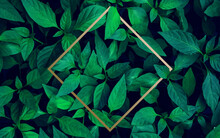 Lots Of Bright Green Tropical Leaves As A Background With A Gold Stripe In The Middle.