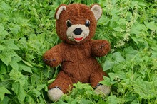 One Large Brown Plush Toy Bear Stands In Green Vegetation With Leaves In A Summer Garden