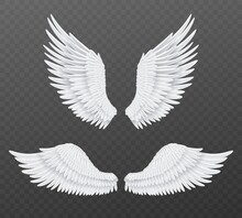 Realistic Wings. Beautiful Isolated Angel Wings, Pair Of 3d Birds White Feathers, Freedom And Spiritual Symbols Flight Animals Parts. Heaven Angelic Design Element Vector Set