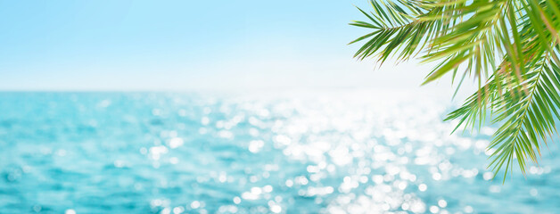 Summer tropical sea and palm leaves