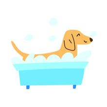 Dachshund Taking A Bath With Bubbles. Funny Illustration On White Background.