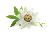 Beautiful Blossom Of Passiflora Plant (passion Fruit) With Green Leaves On White Background