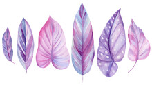 Watercolor Tropical Leaves Of Pink And Purple Color, Illustration, Isolated White Background. Flora Design