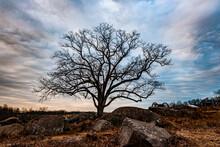 Witness Tree At Sunset, Devils Den, Gettysburg National Military Park, Pennsylvania USA