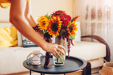 Woman Puts Vase With Sunflowers And Zinnia Flowers On Table. Housewife Takes Care Of Interior And Fall Decor At Home.