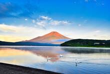 赤富士と白鳥