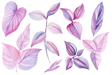 Tropical Leaves Of Pink And Purple Color, Watercolor Illustration, Isolated White Background