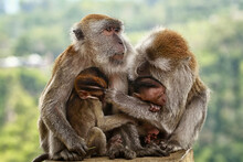 The Portrait Of Monkey And Family