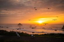 Seagulls At Sunset Over Face Rock Beach In Bandon, Oregon