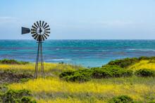 Usa, California, San Simeon, Windmill Among Mustard Field At Pacific Ocean Coastline