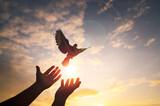Fototapeta Kawa jest smaczna - Hands praying and free bird pigeon enjoying nature on sunset background, freedom, hope, faith, belief, better future, independence day, liberty