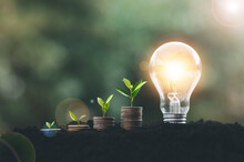 Alternative Energy, Renewable Energy, Saving Energy And Finance, Energy Stock Investment, Tree Growing Up On Coin And Lightbulb On Soil.