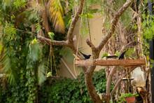 Algumas Aves Sendo Criadas Soltas No Quintal.