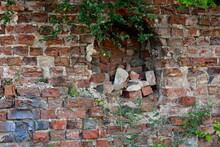 Close Up On A Hole In The Middle Of A Medieval Wall Made Out Of Red Bricks, With Some Debris Still Laying Inside Of It And With Some Vines Growing Out Of The Top And From The Sides Seen In Poland