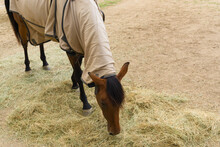 View Of A Horse Protected With A Cloth For The Cold