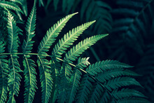 Tropical Green Plants In Natural Conditions