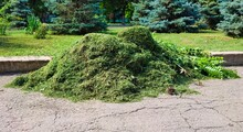 Stack Of Freshly Cut Grass In Park