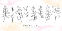 Botanical Arts. Hand Drawn Continuous Line Drawing Of Abstract Flower, Floral, Ginkgo, Rose, Tulip, Bouquet Of Olives. Vector Illustration.