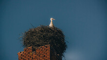 Stork In The Nest On The Roof