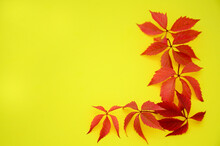Yellow And Red Dry Autumn Leaves On A Yellow Background With A Copy Space. Autumn Background, Flat Lay, Pattern.