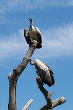 Statue Of The Eagle
