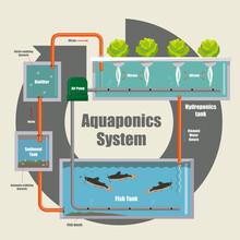 Illustrative Diagram Of How The Aquaponics System Work