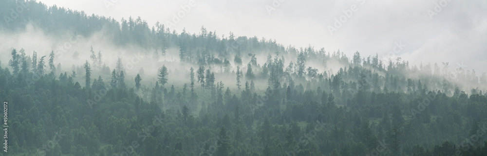 Mountain taiga, a wild place in Siberia. Coniferous forest, morning fog, panoramic view.