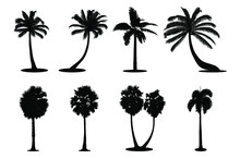 Set Of Palm Silhouette Vector Illustration On White Background.