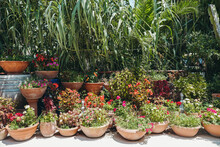 Plants In Pots Outdoors In Summer. Exterior Design With Plants And Flowers. Urban Jungle Concept