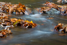 Autumn Leaves Over The Water