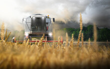 Combine Harvester Tractor Treshing In A Wheat Field Farming With Dark Clouds An Thunderstorm