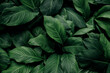 Leinwandbild Motiv abstract green leaf texture, nature background, tropical leaf