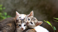 Three Small Kittens Lying Outdoor, Closeup View Of Cats On A Natural Background With Copy Space