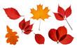 Leinwandbild Motiv Collection of bright autumn transparent leaves isolated