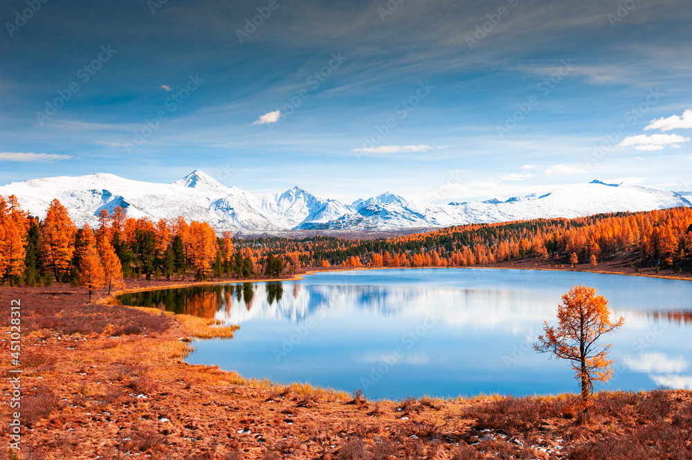 Kidelu lake in Altai mountains, Siberia, Russia. Snow-covered mountain peaks and yellow autumn forest. Beautiful autumn landscape.