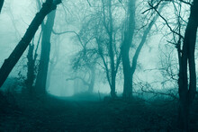 A Horror Concept Of A Path Through A Spooky Forest On A Foggy Winters Day