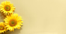 Sunflowers On Panoramic Banner Flat Lay. Beige, Yellow Paper Background. Simple, Minimal Monochromatic Design With Natural Flowers. Copy-space, Place For Text.