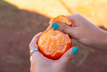 Female Hands Peeling Mandarin
