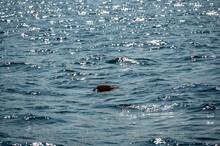 Lobster Trap Buoy Floating On A Choppy Ocean In The Atlantic Ocean