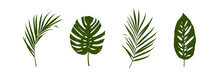 Set Of Tropical Leaves Silhouettes Isolated On White Background.