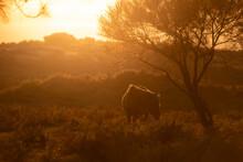 Contra Luz De Cavalo Selvagem Na Serra Debaixo De árvore Ao Fim De Tarde