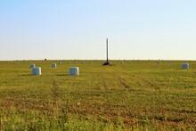Bales Of Freshly Cut Hay In The Field