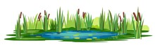 Swamp Landscape With Reed And Cattail. Isolated Element. Horizontally Composition. Overgrown Pond Shore. Illustration Vector