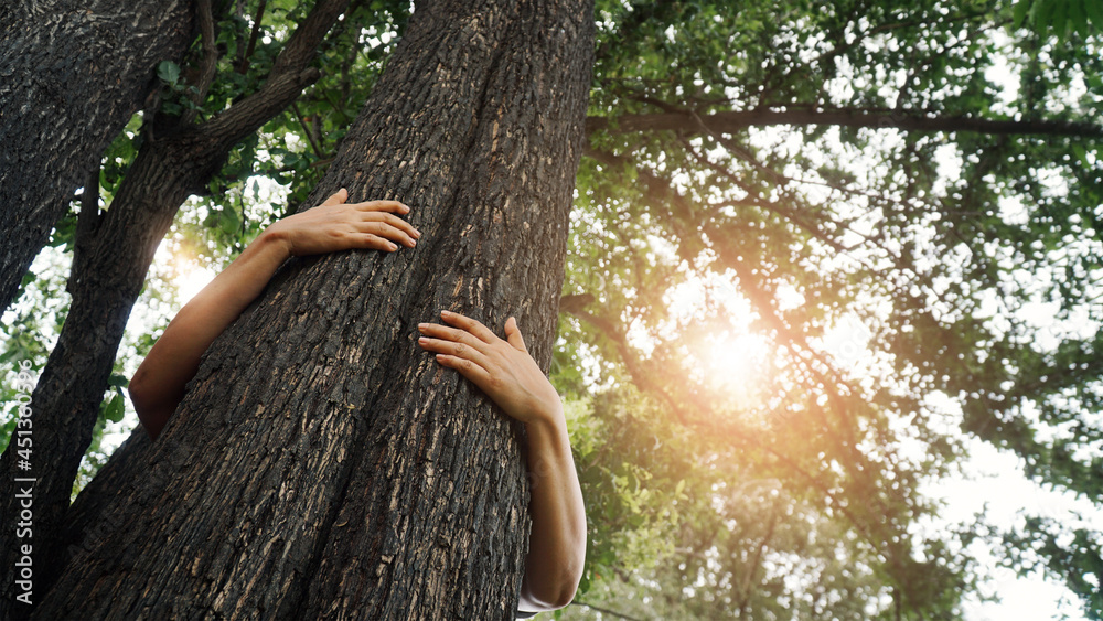 Woman hugging a big tree in the outdoor forest, Ecology and nature, Protect environment and save the forest, Energy sources for renewable, Earth day.