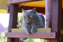 A Gray Cat Is Sitting On A Wooden Ladder Near A Log House.
